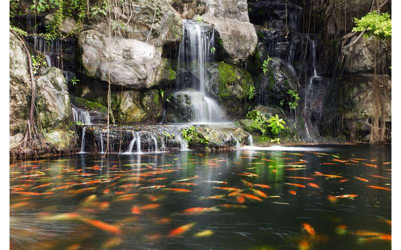 Koi swimming in a pond by a waterfall.