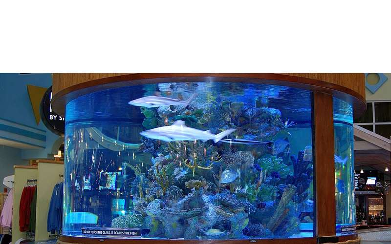Large tank with shark and other fish