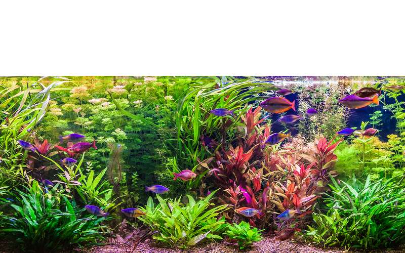 Bright fish and water plants in a fish tank