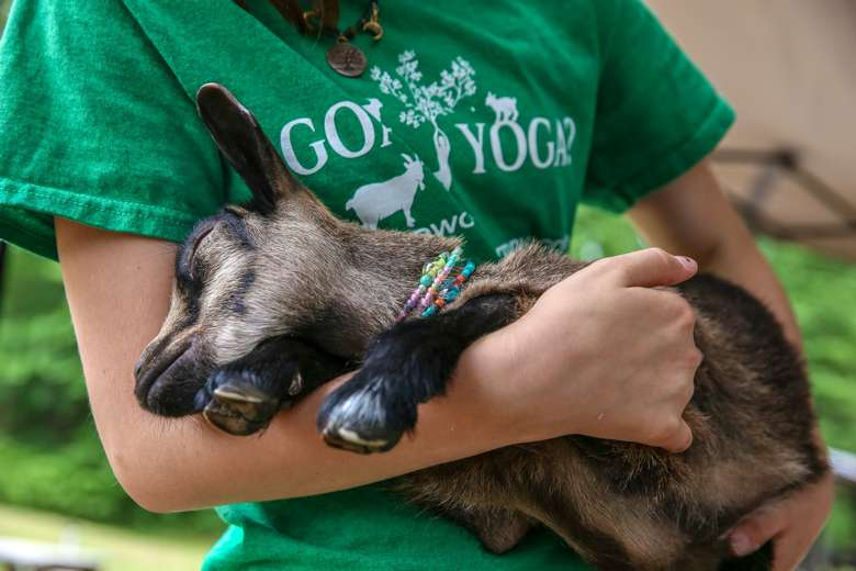 employee holding a baby goat