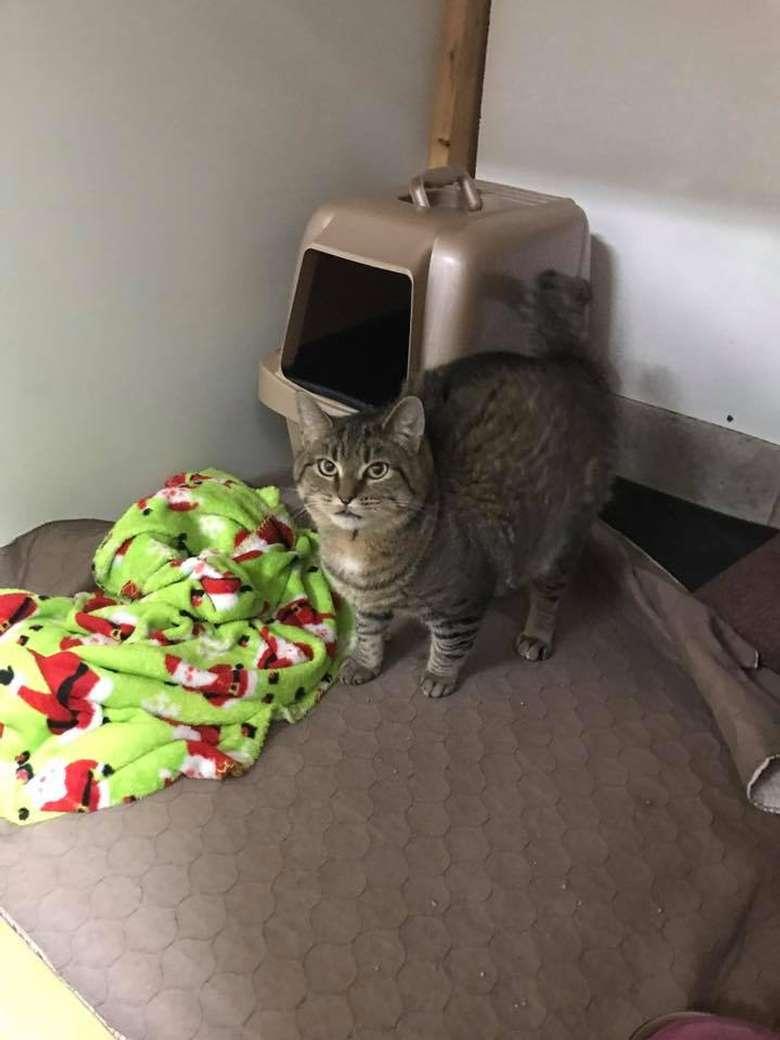 a cat on a mat near a green blanket