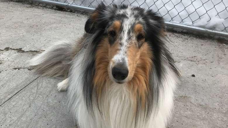 a medium sized dog staring