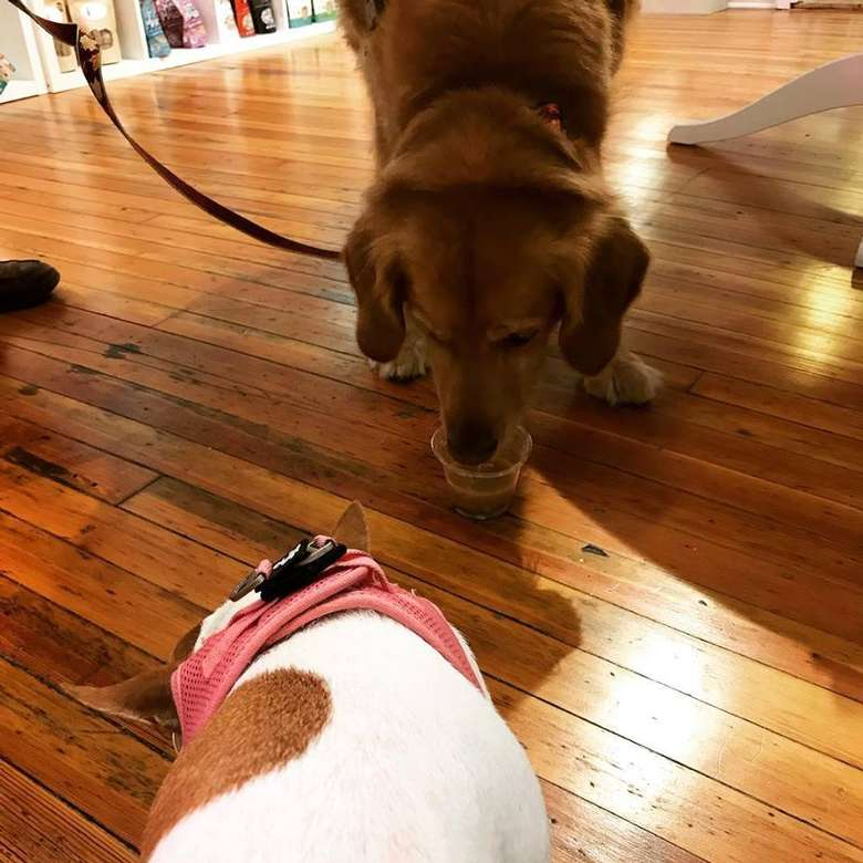 two dogs in a store
