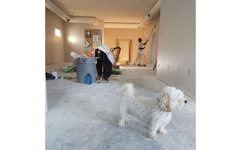 dog on the floor with a cleaner working in the background