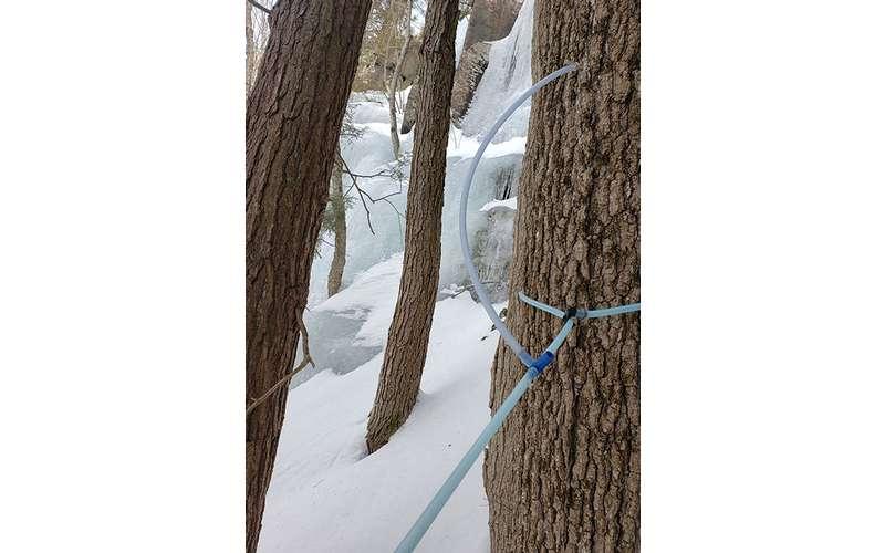 sap taps on trees