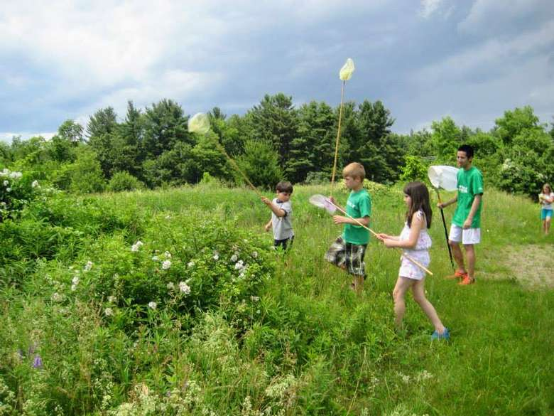 kids catching butterflies