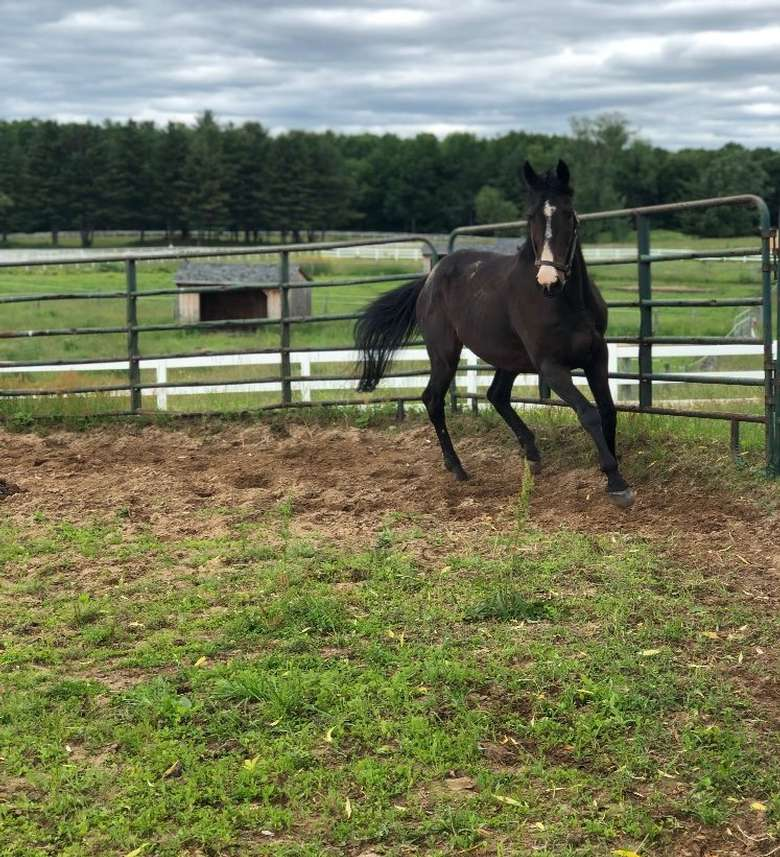 a horse galloping in a fenced in area