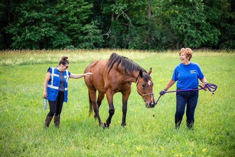 Therapeutic Horses of Saratoga, Inc. (2)