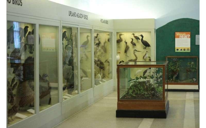 display cases of birds