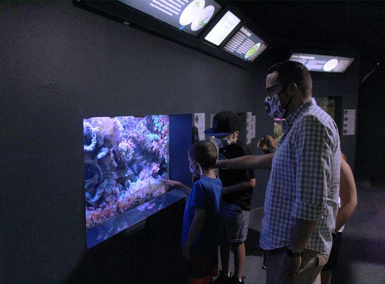 A family in face coverings views the coral tank in the Berkshire Museum Aquarium.
