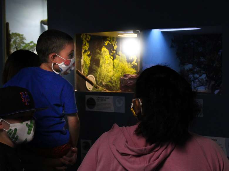 A family examines a lizard in the reptile room of the Berkshire Museum Aquarium.