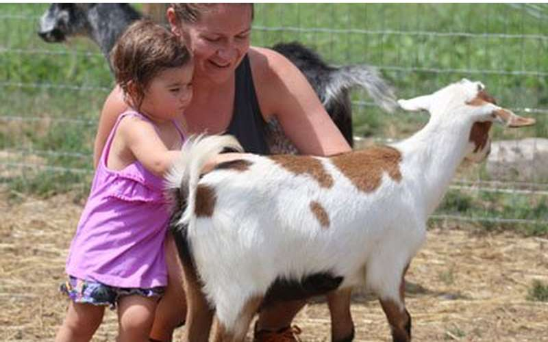 woman and child in a petting zoo area with a small goat