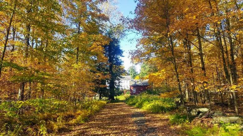trail in woods in fall