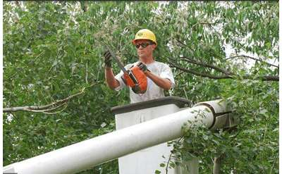 man with small chainsaw working on tree