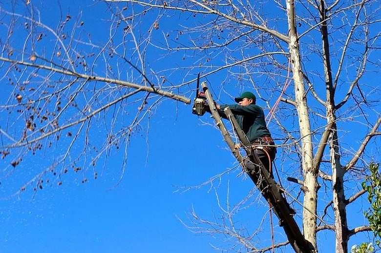 man cutting branch off tree