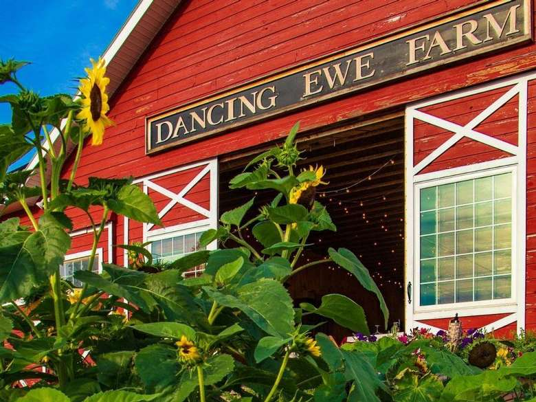 red farm building with sign that reads dancing ewe farm