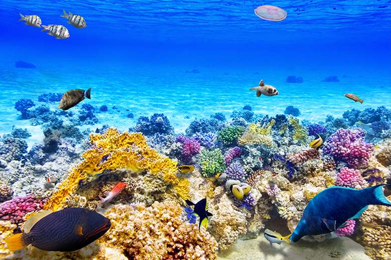 bright and colorful underwater view of fish in the ocean