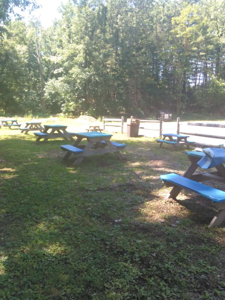 picnic tables outdoors on a lawn