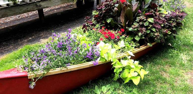 plants on display in a red canoe