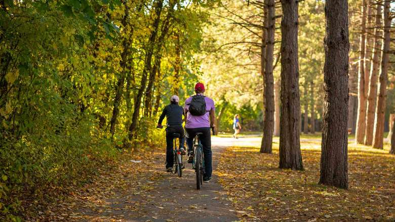 people biking on trail