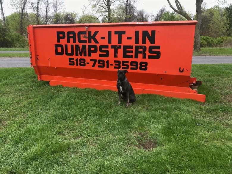 orange dumpster with dog in front of it
