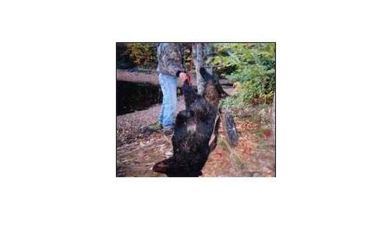 man holding a bear by the legs in the woods