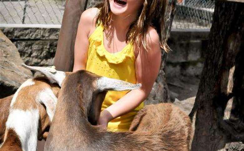 young girl laughing as goats eat from her hand