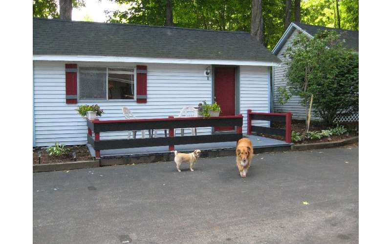 two dogs outside a cottage