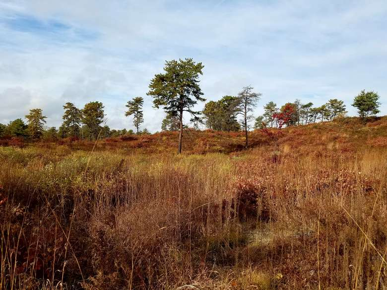 pine barrens landscape