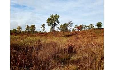 pine barrens landscape
