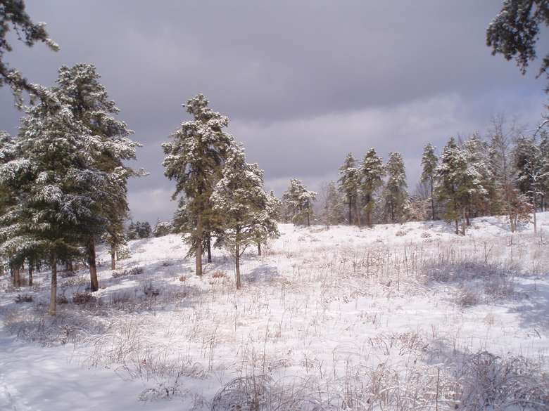 a snowy landscape with trees