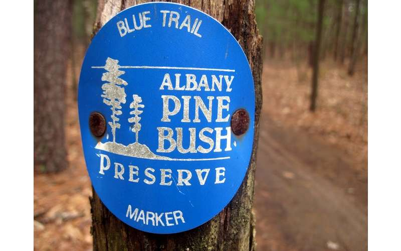 a blue trail marker on a post