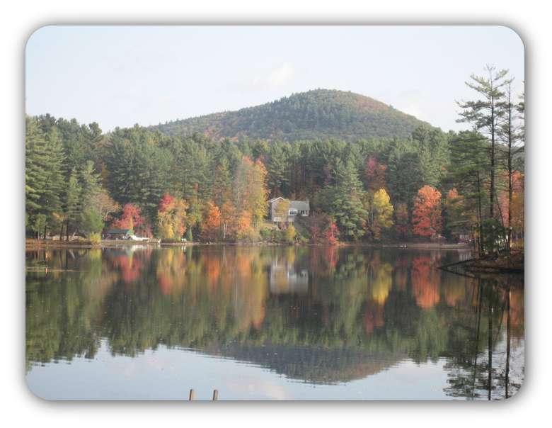 artsy photo of fall foliage
