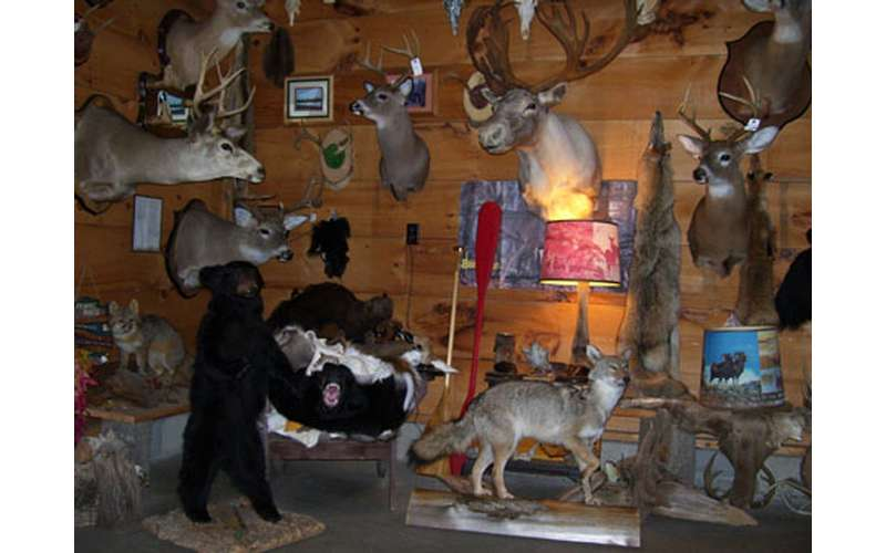 A Wide Variety Of Preserved Animals
