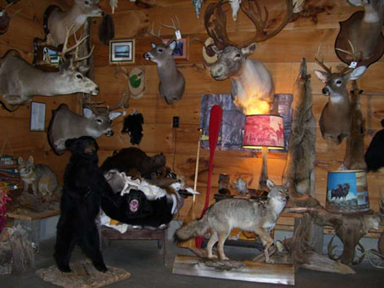 a variety of preserved animals