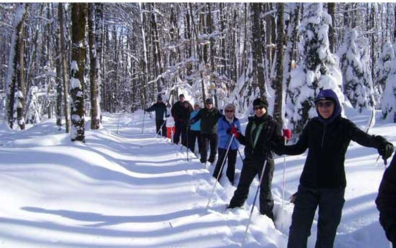 Go Cross-Country Skiing As A Group