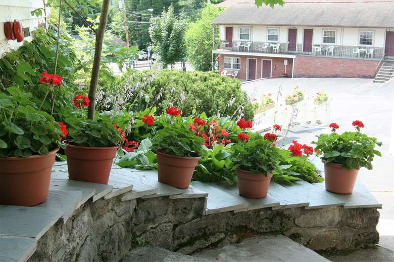 pots of geraniums on a set of stone steps