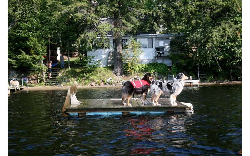 two dogs standing on a raft on the water