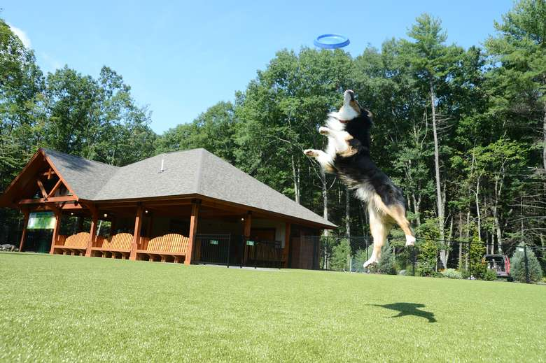 a dog leaping up to catch a frisbee