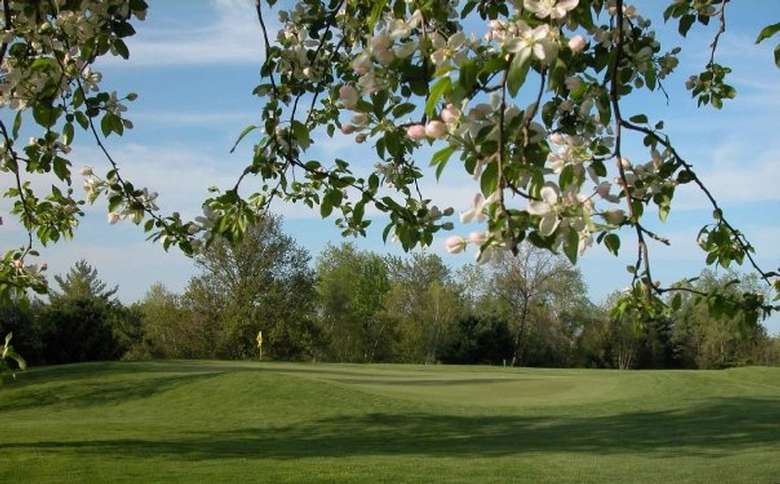 foliated trees on a golf course
