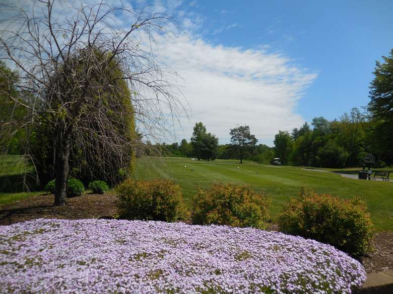 purple flowers at airway meadows golf course