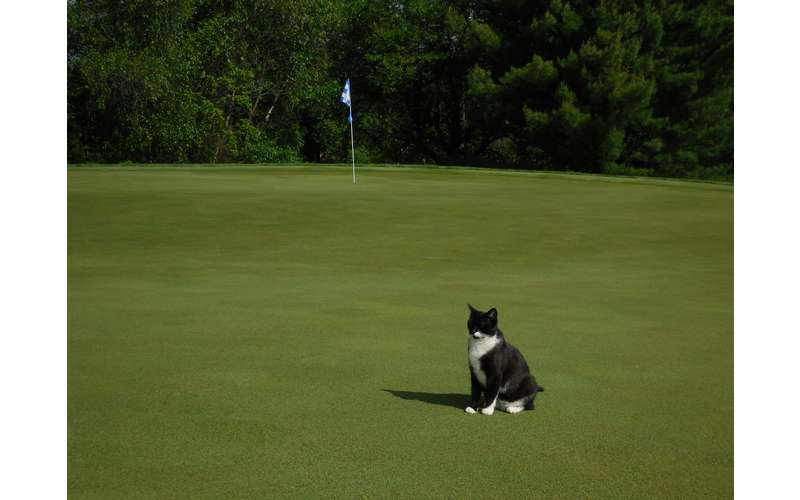 Louie will greet you as you come up to #2 Green.  Be sure to bring him a treat!