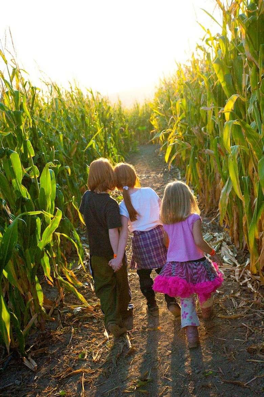 three kids in a corn maze