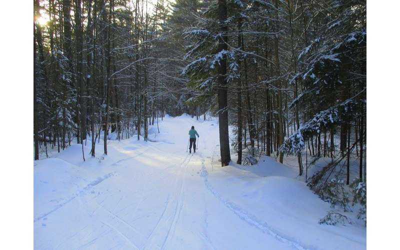 a person cross-country skiing surrounded by woods