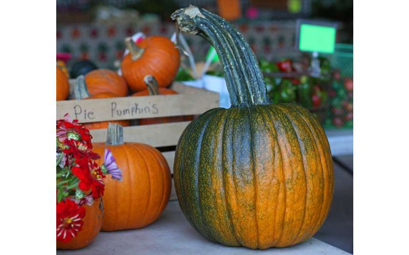 Get some pumpkins from Gifford Farm during the fall season.