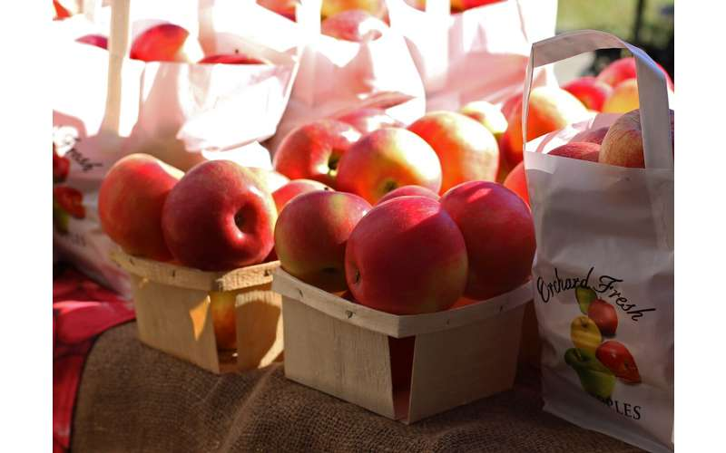 Malta Ridge Orchard & Gardens offers a wide selection of crisp apples.