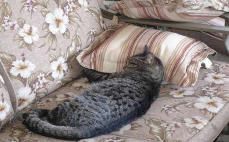 gray cat laying on a couch