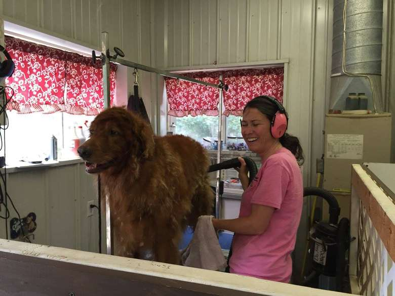 woman in a pink shirt grooming a large dog