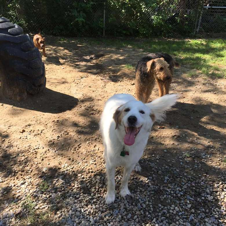 happy dogs playing outside