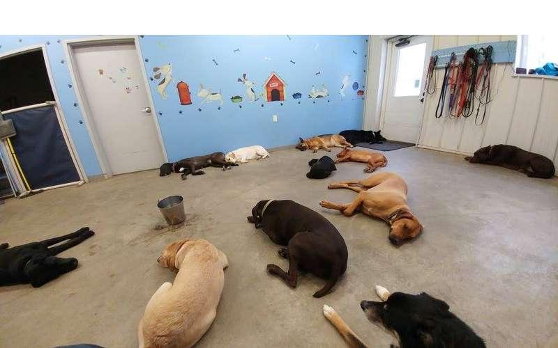 Sleepy Doggies!